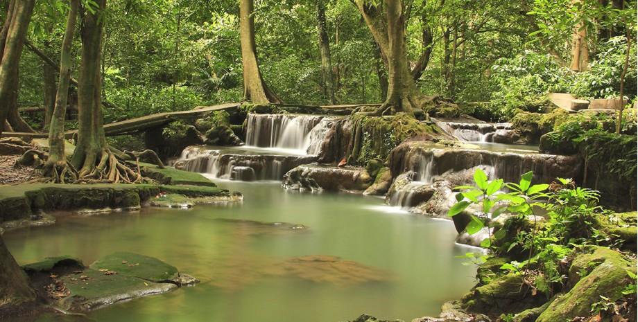 Forêt tropicale de Krabi