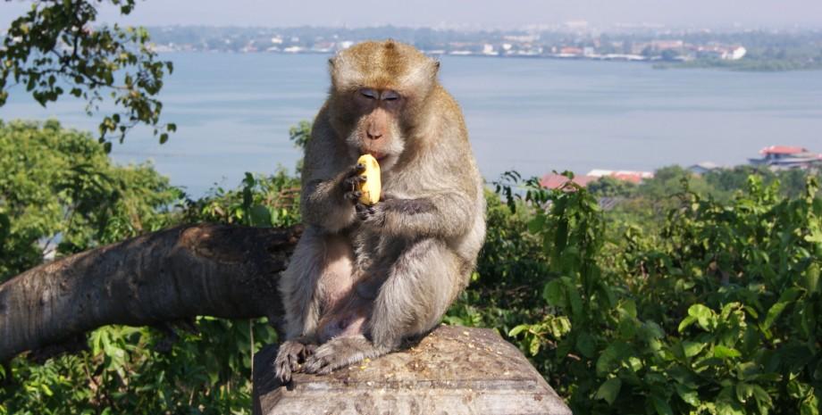 Découverte de Pattaya et ses alentours
