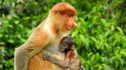 Expérience dans la jungle de Bornéo