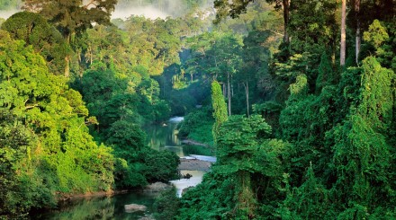 VTT dans la jungle de Bornéo