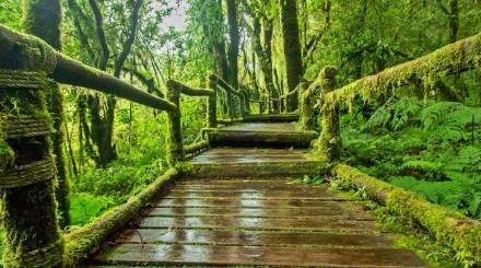 Balade en forêt tropicale