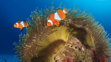 Snorkeling à Nusa Lembongan et Nusa Penida